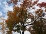Światowy Dzień Drzewa – Grupa III