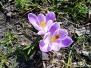 Z powiewem wiosny - czyli wiosenne inspiracje w grupie II